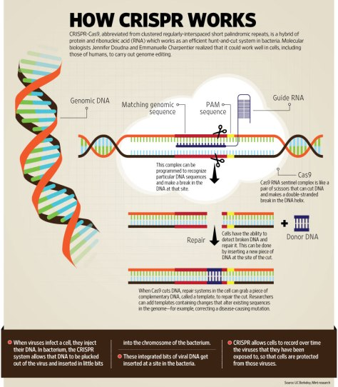 g-CRISPR_web[1]